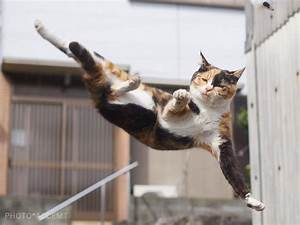 Japanese Photographer Captures Cats Best Kung