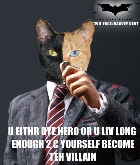 Two Faced Meme - harvey dent cat venus the two faced cat know your meme