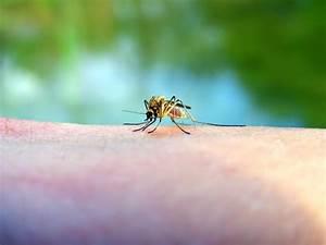 Photos piqures puces de parquet for Insecte parquet