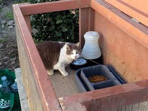 recipe for a feeding station you mix one ant proof bowl With ant proof dog food container