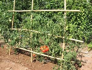 Comment Tuteurer Les Tomates : jardinage les tomates s installent au jardin ~ Melissatoandfro.com Idées de Décoration