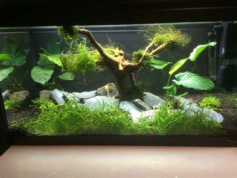 mon premier aquarium d eau douce 28 images nouvel aquarium d eau douce tetra 130 litres mon