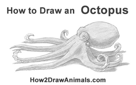 draw  octopus