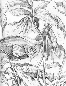 Illustration   sketcharound