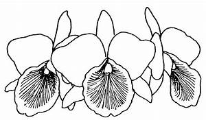 Orchid Line Drawings