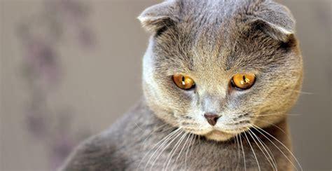 muschi und miez kennst du diese  katzenrassen