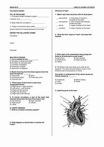 Low Ability Worksheet Circulatory System  By