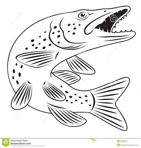 pike fish stock images image