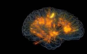The Monkey Buddha  Visualizing Brain Activity