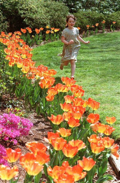 eleletsitz tulip garden images eleletsitz tulip garden ideas images
