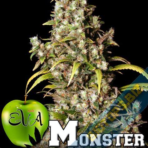 graine de cannabis interieur feminise 28 images jamaican graines de cannabis f 233 minis 233