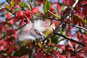 Baum Mit Roten Blättern : kostenlose foto baum ast bl hen frucht blatt blume busch lebensmittel rot produzieren ~ Eleganceandgraceweddings.com Haus und Dekorationen