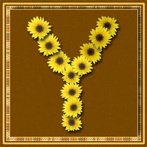 letter yyellow flowers lettering alphabet sunflower