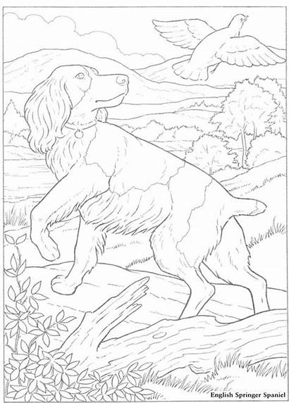 Springer English Spaniel Coloring Dog Outline Template