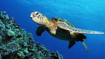 Turtle Wallpapers Desktop Tutorialchip Wallpapertag
