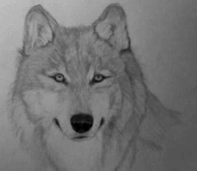 My First Wolf Drawing