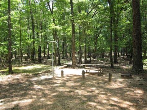caddo lake state park campsites  water texas parks