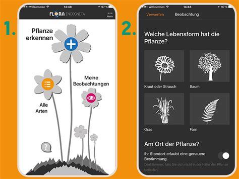 was w 228 chst da pflanzen bestimmen mit der app flora incognita 246 koleo umwelt und naturschutz