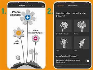 Blumen Erkennen App : was w chst da pflanzen bestimmen mit der app flora ~ A.2002-acura-tl-radio.info Haus und Dekorationen
