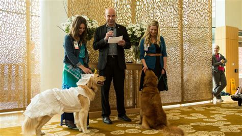 childrens hospital therapy dogs tie knot  pawsome