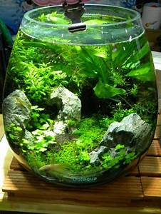 Aquarium Einrichten Pflanzen : pin von alisha phillips auf tank ideas pinterest aquarium aquaristik und aquarien ~ Michelbontemps.com Haus und Dekorationen