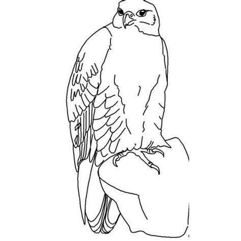 hawk falcon coloring pages  kids preschool