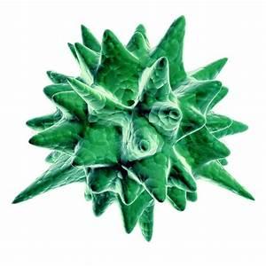 Green Virus On White Background