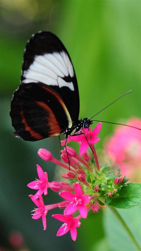 Butterfly flower flying beautiful 1920×1080. Pink Butterflies Wallpaper (69+ images)