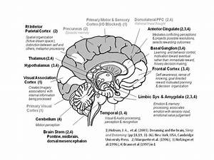 Brain Structures And Functions Diagram - Anatomy Organ