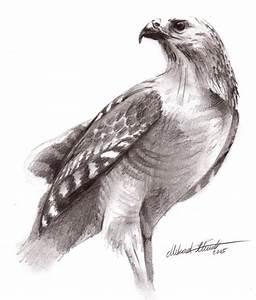 Red Hawk by Regius on DeviantArt