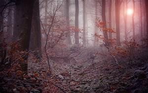 Winter mystic forest wallpaper   1920x1200   #32530