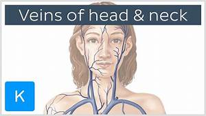 Veins Of The Head And Neck  Preview