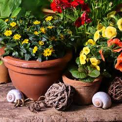 Blumen Für Schatten : balkonblumen einj hrig und zweij hrig sonne ~ Lizthompson.info Haus und Dekorationen