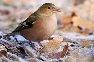 Vögel Im Winter Kindergarten : was fressen unsere winterv gel nabu ~ Whattoseeinmadrid.com Haus und Dekorationen