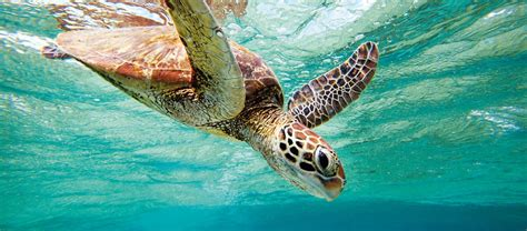 turtles  australia austravel blog
