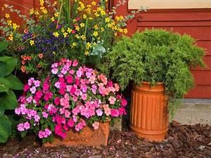 Kuebelpflanzen Fuer Terrasse : k belpflanzen garten ~ Orissabook.com Haus und Dekorationen