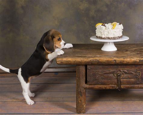 sugar  treats   dog  quit sugar