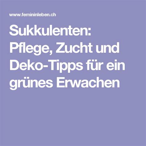 Einblatt Pflege Tipps by Sukkulenten Pflege Zucht Und Deko Tipps F 252 R Ein Gr 252 Nes
