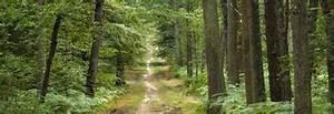 Annonce Vente Foret : le site d information du propri taire forestier ~ Medecine-chirurgie-esthetiques.com Avis de Voitures