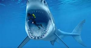 Megalodon And Blue Whale - The Largest Whale In The World