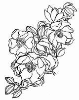 Magnolia Flower Flowers Drawings Coloring Magnolias Drawing Pages Tattoo Pattern Sketches Jumper Florals Colouring Draw Louisiana Flickr Morning Hand State sketch template