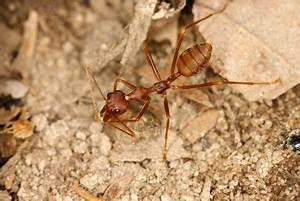 Ameisen Bekämpfen Wohnung : essig gegen ameisen so wenden sie es an ~ Michelbontemps.com Haus und Dekorationen