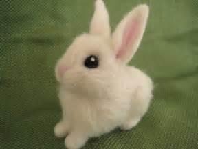 Miniature White Baby Bunnies