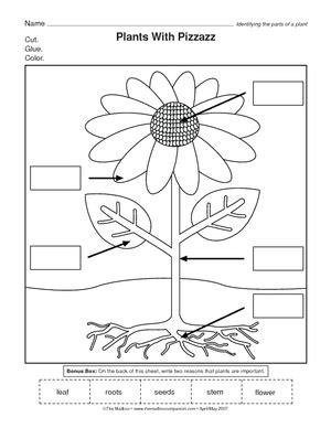 parts of a plant worksheet for kindergarten worksheets for
