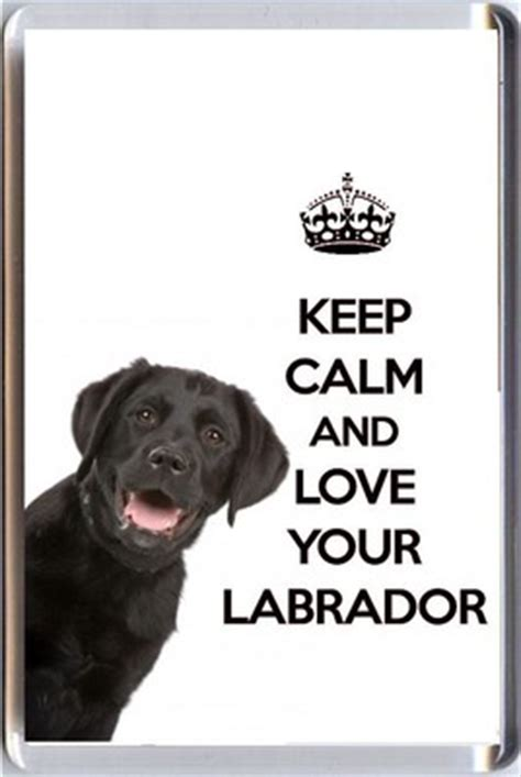 calm  love  labrador   image   black