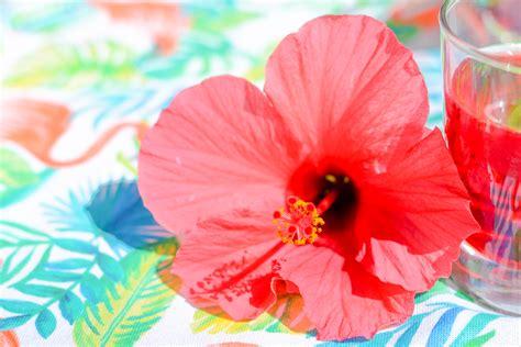 Boisson Rafraîchissante à La Fleur D'hibiscus