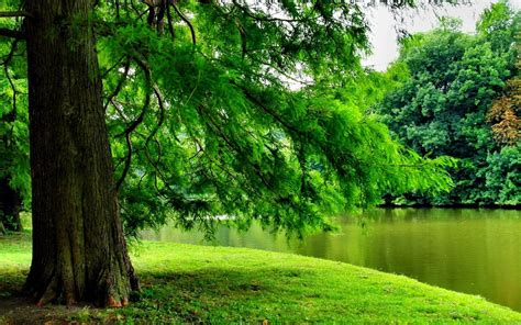 green tree   river hd wallpaper background image