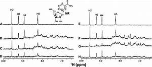 Nr Binding To Milk Demonstrated By Nmr  Organic And