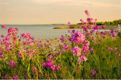 Flowers Sea Landscape Desktop Wallpapers Backgrounds Nature