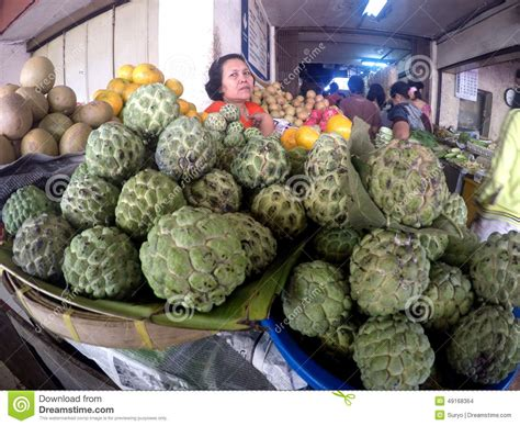 sugar apple editorial stock image image